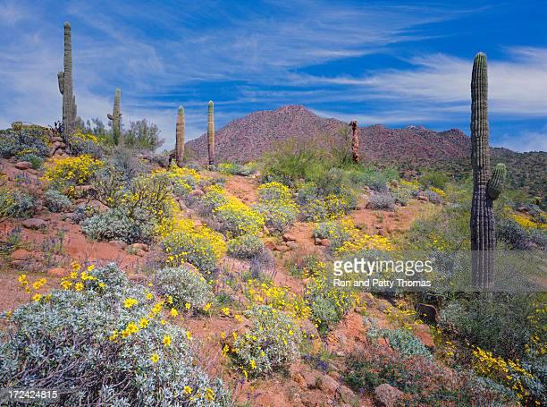 Arizona spring desert