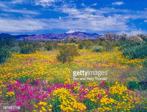 アリゾナの春の花