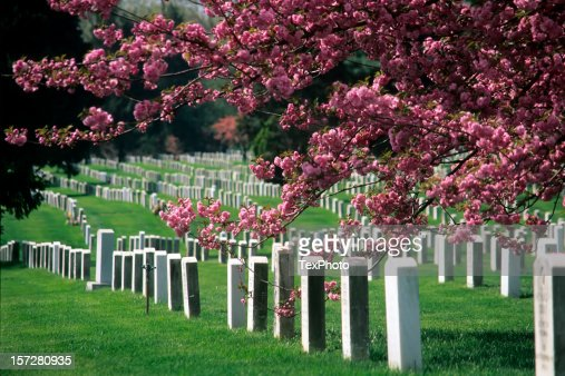 Arlington National Cemetery in Bloom