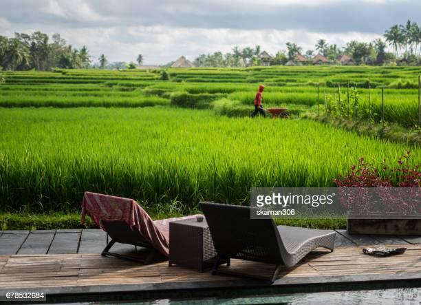 armchair with pool on the rice terrace field near Ubud bali