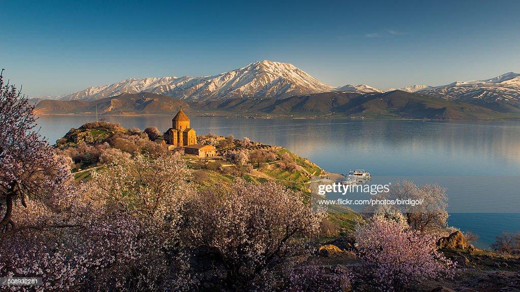 Armenian church and sakura