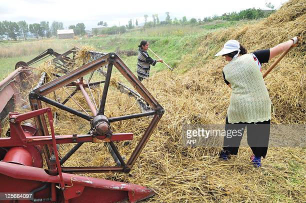 Armenian women rake hay on August 24 2011 in a fied near Vardadzor In the midst of the harvest season in Vardadzor around 130 kms from the exSoviet...