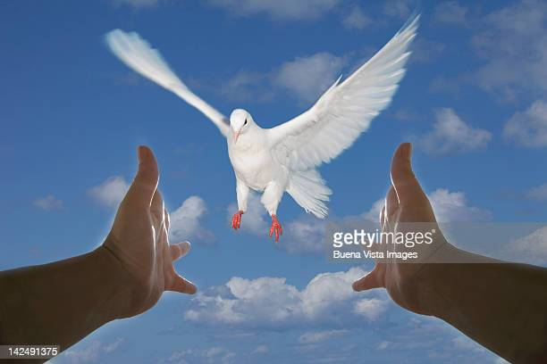 Arms stretched toward a dove