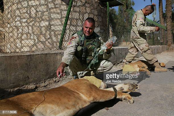 Baghdad Zoo Stock Photos and Pictures | Getty Images