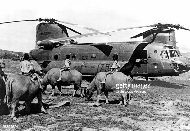 Army CH47 Chinook helicopter in a field meets up with several Vietnamese boys riding their water buffaloes to nearby rice paddies Nha Trang Viet Nam...