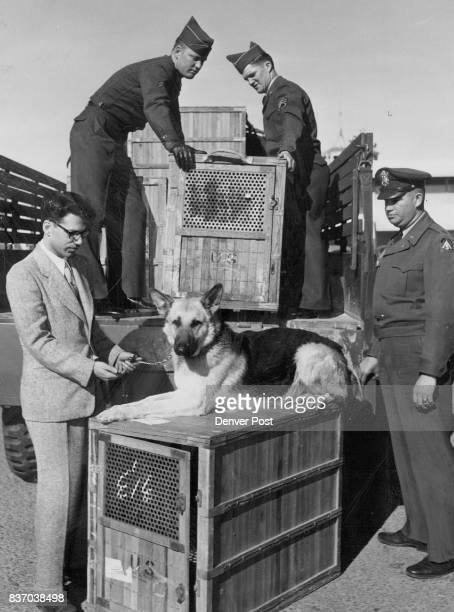 Army K9 Commands HighFlying CaninesPrivate York one of the army's canine recruits is unloading at Stapleton field after flying here from Washington...