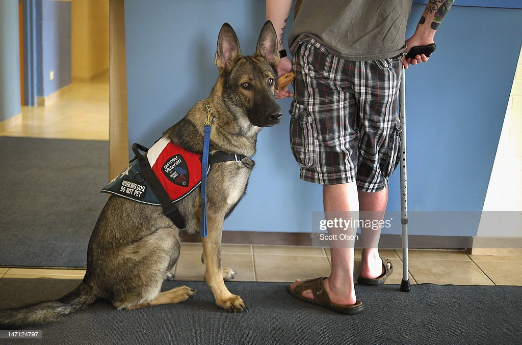 Army veteran Brad Schwarz brings his service dog Panzer for a check up at Southwest Animal Care Center May 3, 2012 in Palos Hills, Illinois. Schwarz uses a service dog to help him cope with post-traumatic stress disorder (PTSD) related to his 2008 tour in Iraq. In addition to suffering from PTSD, Schwarz has memory loss related to Traumatic Brain Injury (TBI) and he must walk with a cane because of vertebrae and nerve damage in his back and legs. Ten days before he was scheduled to rotate home from a 15-month deployment in Iraq, his second, the Humvee in which he was riding was struck by an Improvised Explosive Device (IED). Of the 5 soldiers riding in the vehicle, which caught fire after the explosion, Shwarz was the only one to survive.