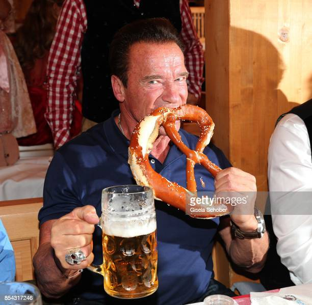Arnold Schwarzenegger eats a Brezn during the Oktoberfest at Schuetzen Festzelt at Theresienwiese on September 26 2017 in Munich Germany