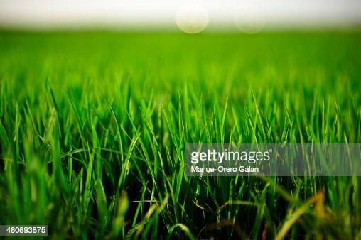 Around the grass