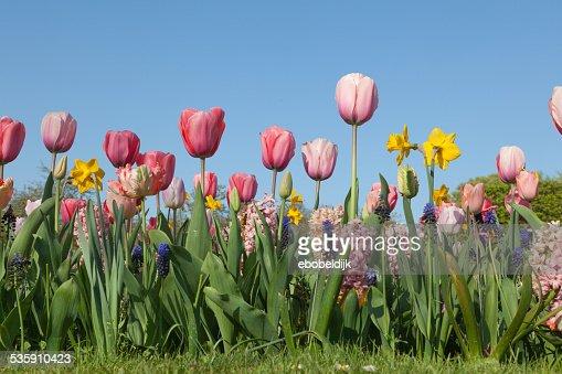 Arrangiamento di diversi fiori : Foto stock