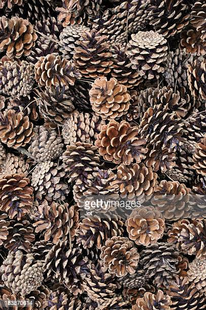 Arrangement of dried, fallen pine cones