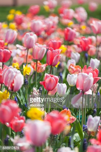 Arrangement of multiple color flowers : Stock Photo