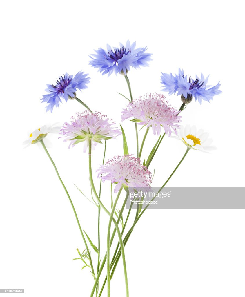 Arrangement of wildflowers isolated on white background