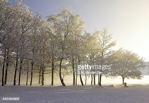 Arrival of sun on a misty winter morning