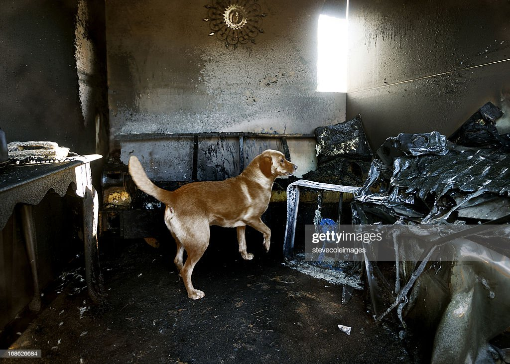 Arson Dog