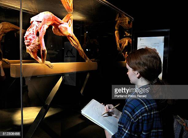 MECCA art student Jennifer Olson sketches a gymnast on the balance beam as 16 students from MECA and their teacher Rob Sullivan held their Anatomical...