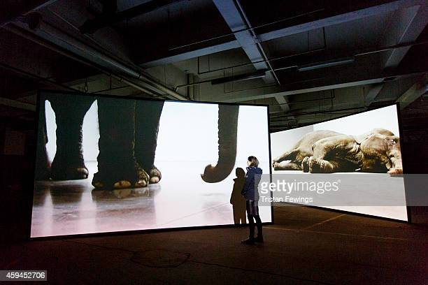 Art technicians install Play Dead Real Time 2003 by Douglas Gordon ahead of the opening of the exhibition 'Here Today' to celebrate the 50th...