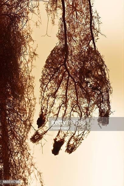 Arteries,human body
