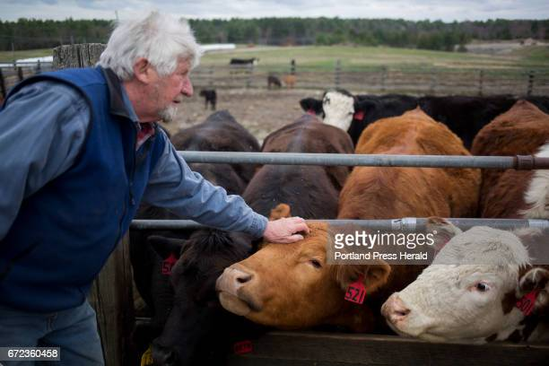 Arthur Randall Jr pets some of his cows after they have been fed