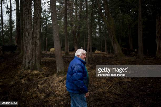 Arthur Randall walks through the woods to get to his cattle on his land near the Westbrook Portland line He has been grazing his cattle for 35 years...
