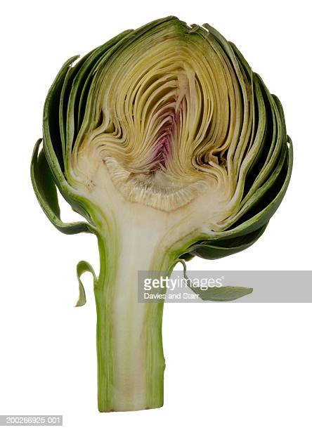 Artichoke, cross section