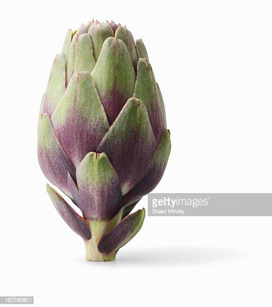 Artichoke on white background