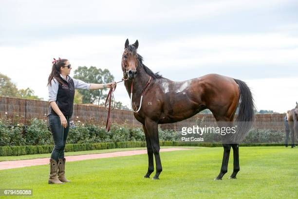 Articus after winning Chairman's Club Handicapat Flemington Racecourse on May 06 2017 in Flemington Australia