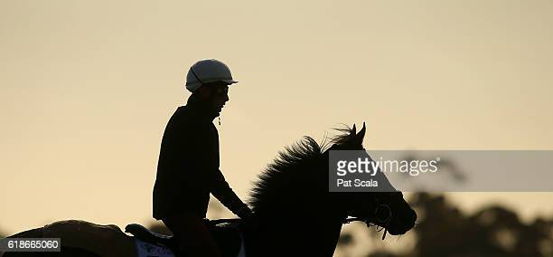 Articus during trackwork at Werribee Racecourse on October 28 2016 in Werribee Australia
