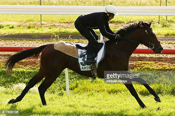 Articus gallops at Werribee Racecourse on October 25 2016 in Werribee Australia