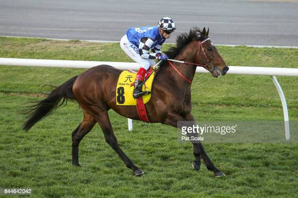 Articus ridden by Craig Williams heads to the barrier before the Dato' Tan Chin Nam Stakes at Moonee Valley Racecourse on September 09 2017 in Moonee...