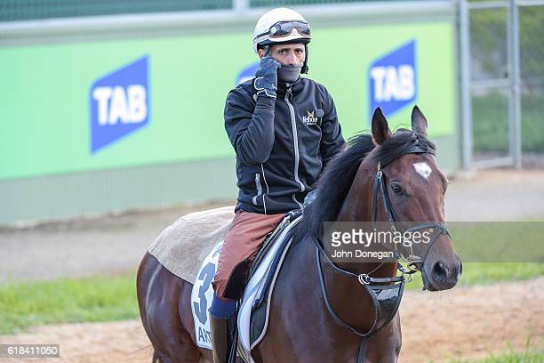 Articus walks at Werribee Racecourse on October 27 2016 in Werribee Australia