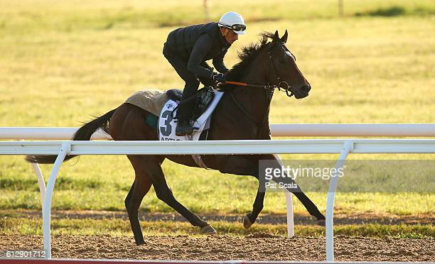Articus works at Werribee Racecourse on October 06 2016 in Werribee Australia