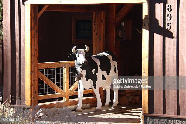 Artificial Cow In Shed