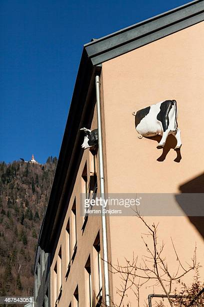 Artificial cow stuck in building wall
