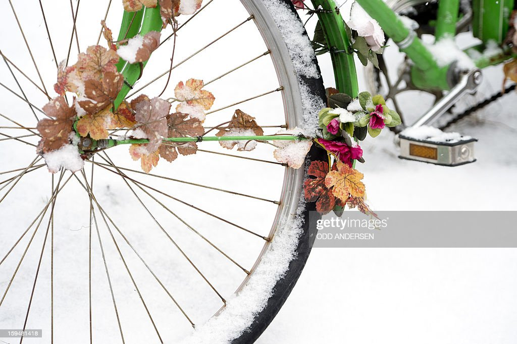 Artificial flowers and leaves are seen on an abandoned bicycle partly covered in snow in Berlin on January 14, 2013. Temperature dropped over night and snow followed at daybreak in the German capital.