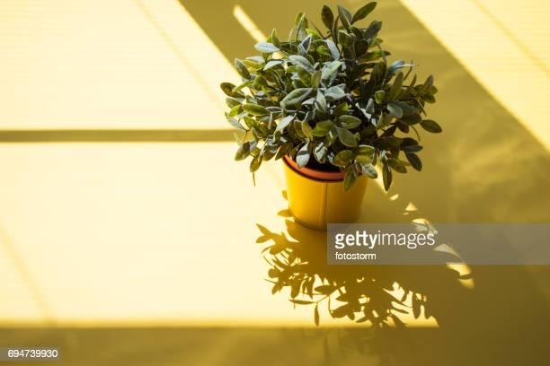 Plante artificielle en pot de fleurs