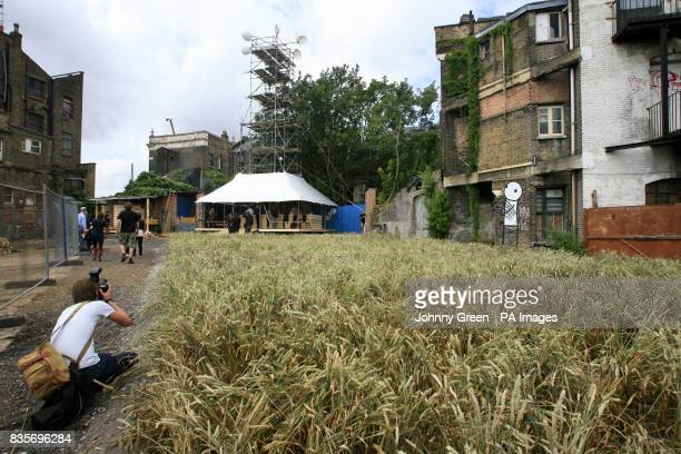 Artist Agnes Denes' 20 metrelong Wheatfield installed as part of Barbican Art Gallery's The Dalston Mill in Dalston Hackney east London with a 16...