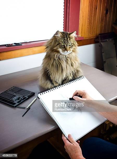 Artista desenhando um Gato Maine Coon em carvão activado.
