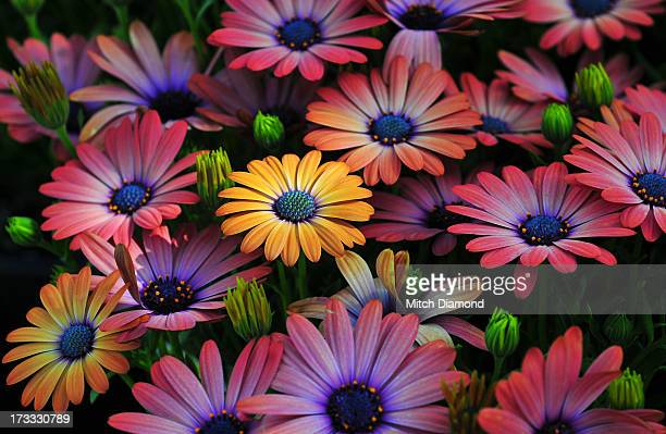 Artistic Flower Details