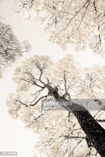 Artistic look - Beech trees in the autumn