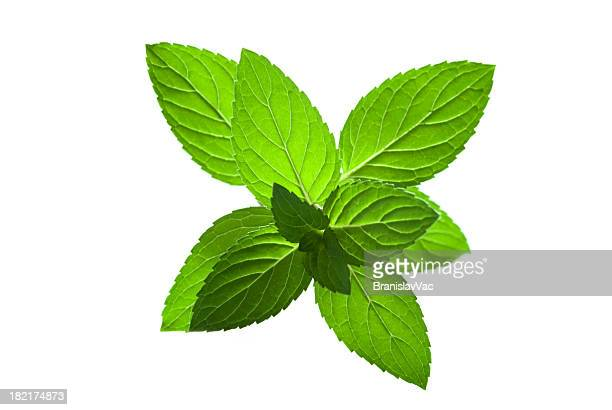 Artistic photograph of a sprig of fresh mint