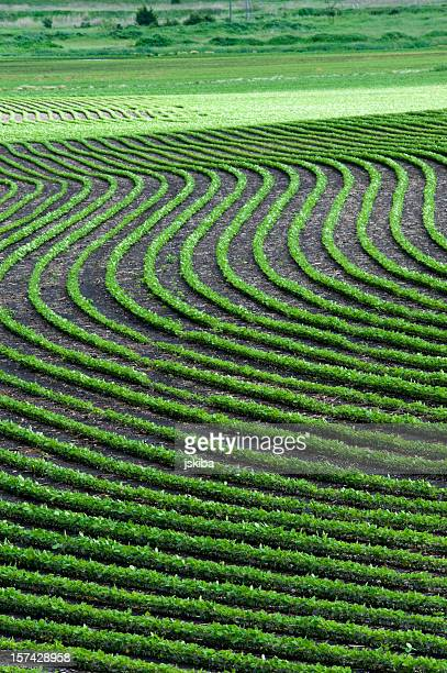 Artistic wavy crop patterns