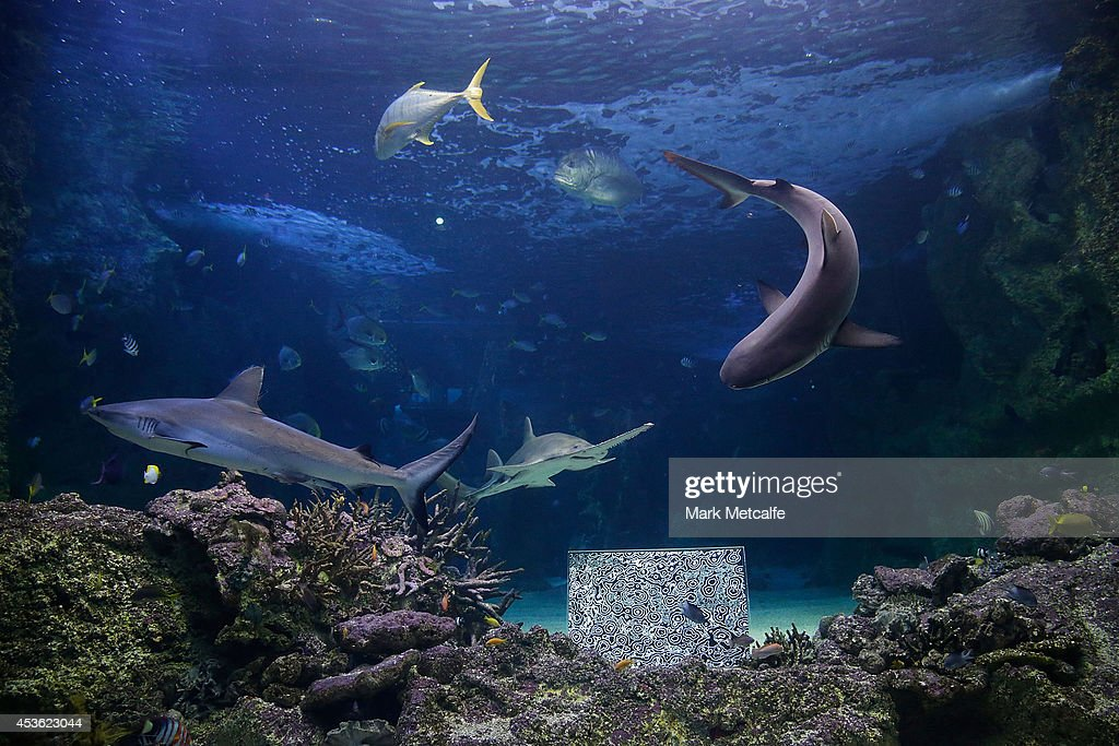 Artwork by BJ Price is seen at SEA LIFE Sydney Aquariam at Darling Harbour on August 15, 2014 in Sydney, Australia.