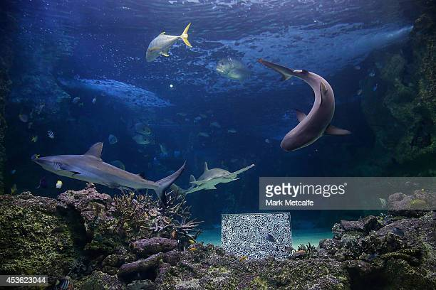 Artwork by BJ Price is seen at SEA LIFE Sydney Aquariam at Darling Harbour on August 15 2014 in Sydney Australia