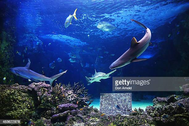 Artworks of BJ Price are seen in an underwater enclosure in the world's first Undersea Art Exhibition at Sydney Aquarium at Cockle Bay on August 15...