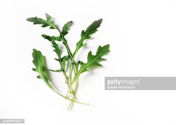 Arugula leaves, close-up