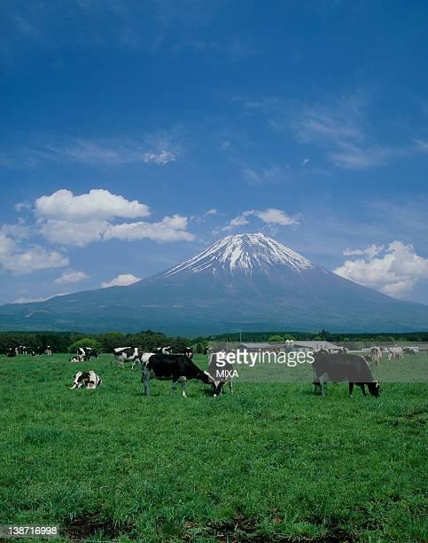 Asagiri Highland and Mount Fuji, Fujinomiya, Shizuoka, Japan