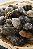 Asari clam. Manila clam.