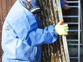 Asbestos corrugated roofing sheet being removed and sealed in a plastic sheet