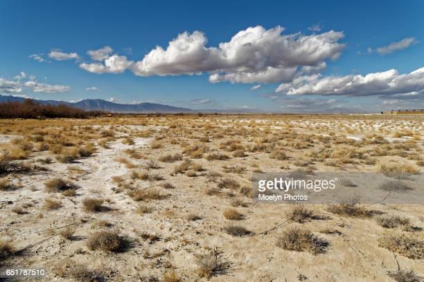 Ash Meadows Desert Landscape